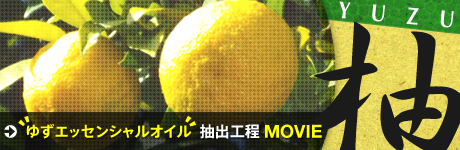 Yuzu Essential oil Extraction process  MOVIE